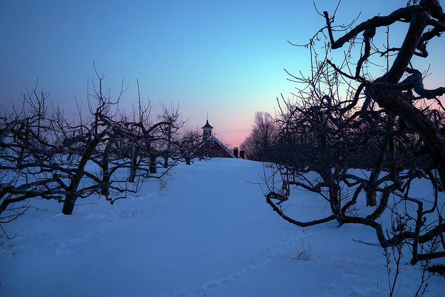 Apple Orchard Winter Sunset by Joann Vitali