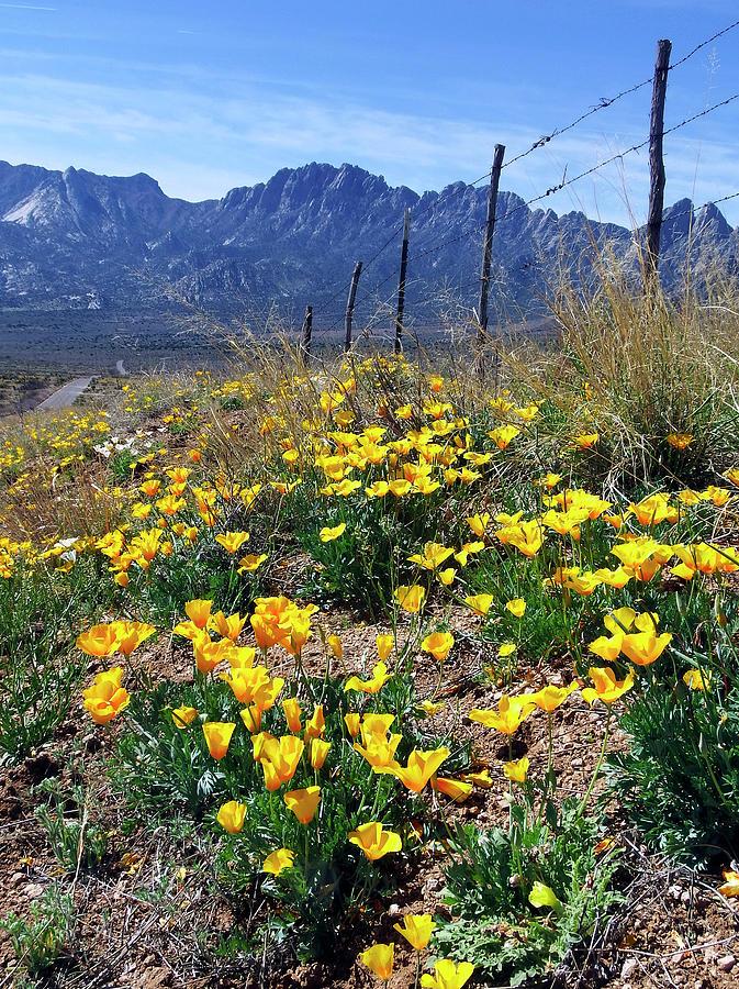 April at Aquirre Springs by Kurt Van Wagner