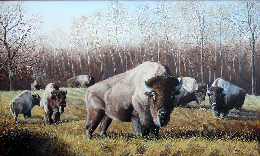 April Morning Bison by Thomas Colstad