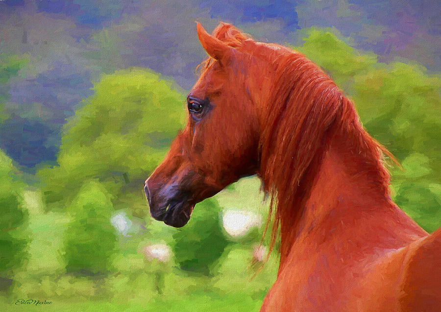 Horse Painting - Arabian Beauty - Painting by Ericamaxine Price
