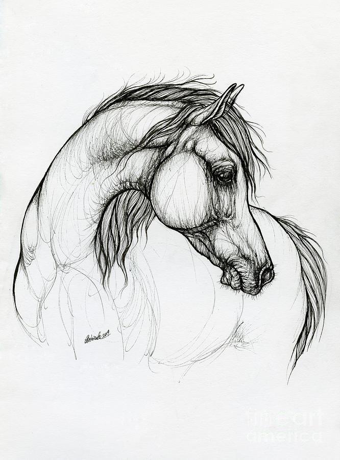 Arabian horse ink art 2019 10 18 by Angel Ciesniarska