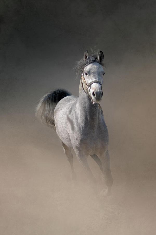 Arabian Horse Running Through Dust Photograph by Christiana Stawski