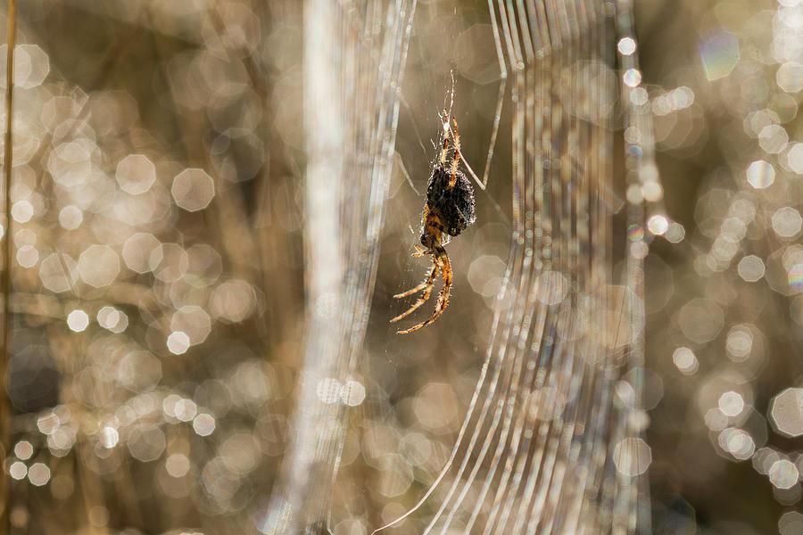 Arachne's Soul Cage by Robert Potts