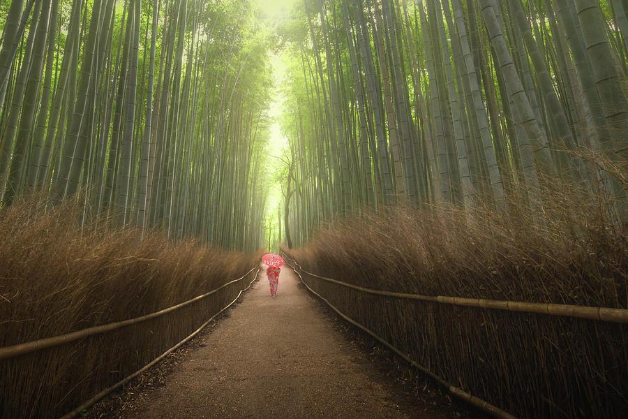 Arashiyama Bamboo Grove by Francis Ansing