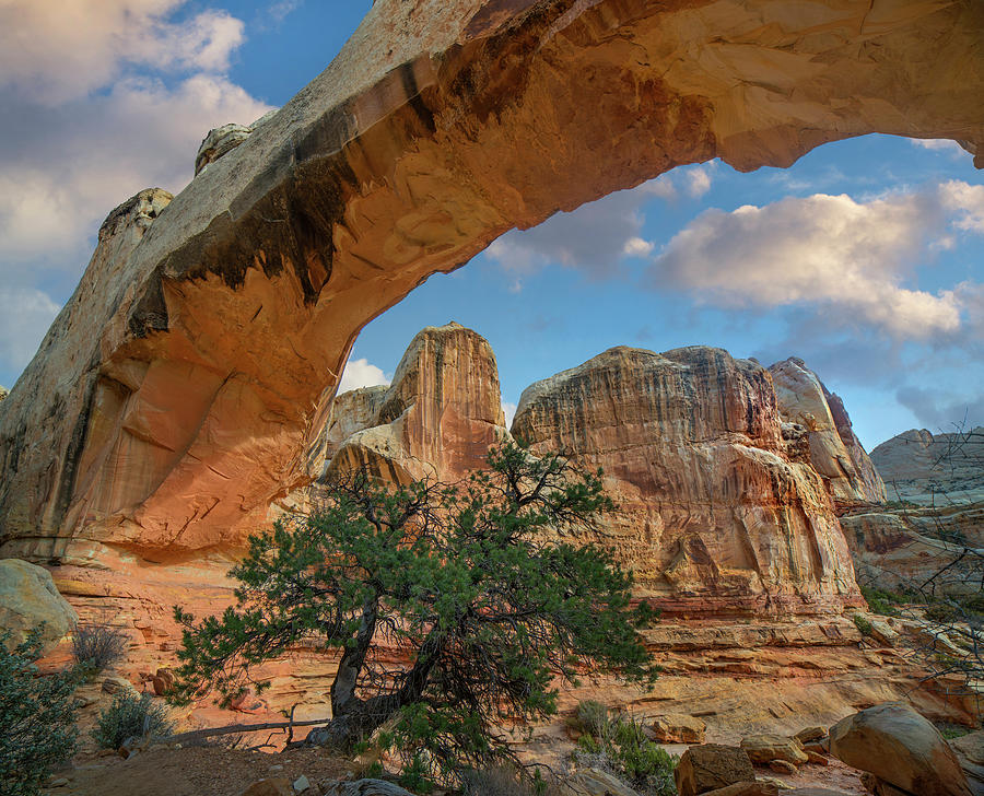 Arch, Hickman Bridge, Capitol Reef National Park, Utah by Tim Fitzharris