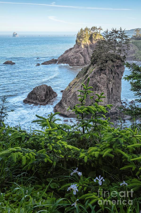 Arch Rock Sea Stacks Photograph