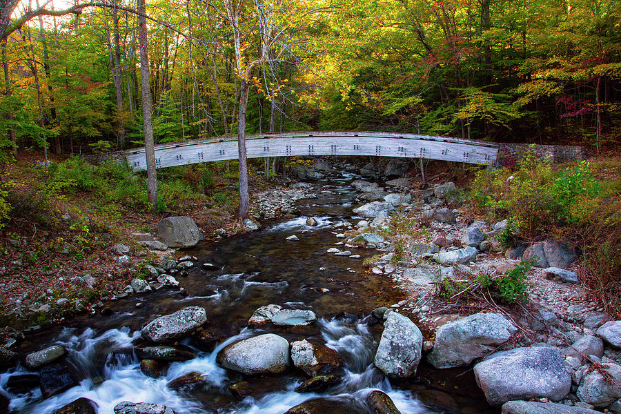 Arched Bridge In Autumn Photograph