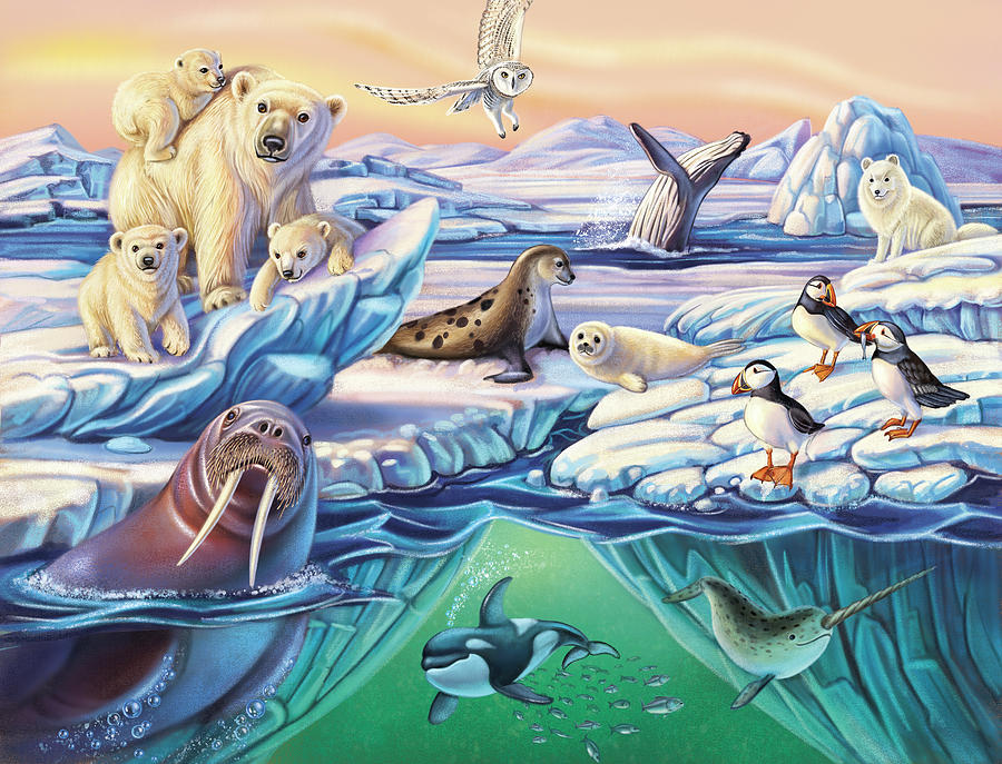 Arctic Animals by Anne Wertheim