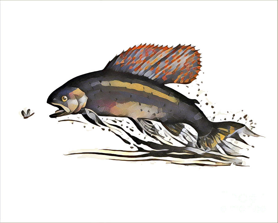 Arctic Grayling by Art MacKay