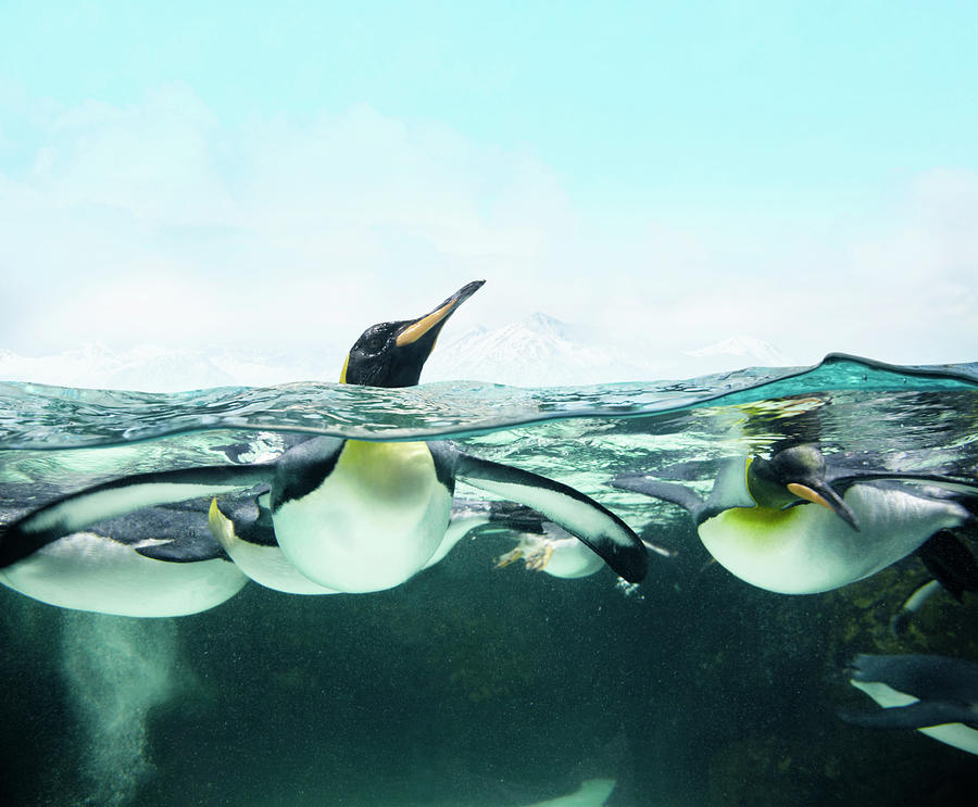 Arctic Penguins Photograph by Colin Anderson