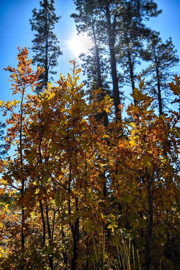 Arizona Autumn Sunlight by Chance Kafka