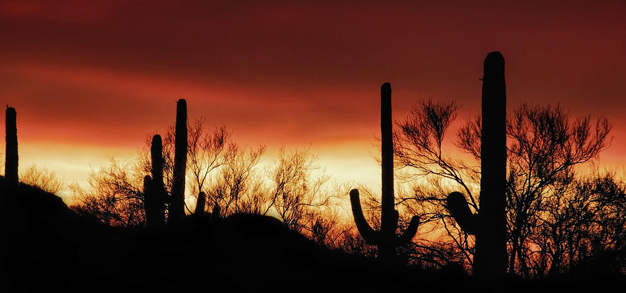 Arizona Monsoon Sunset 2019 by ELAINE MALOTT