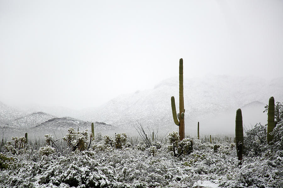 Arizona Snow by Jean Clark