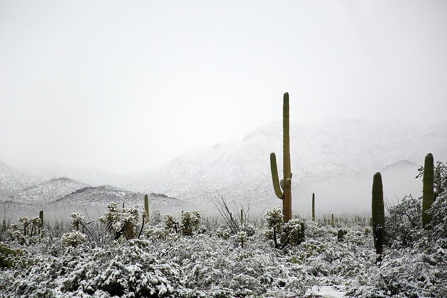 Arizona Snow by Jean Clark