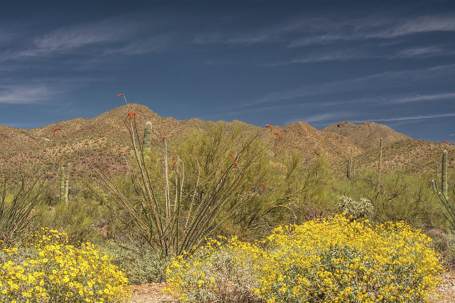 Arizona-Sonora Desert 6522-040719 by Tam Ryan