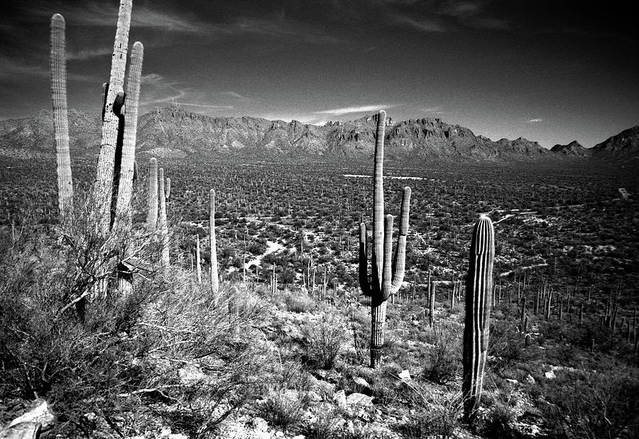 Arizona, Tucson, Saguaro Np, Brown Photograph by James Denk