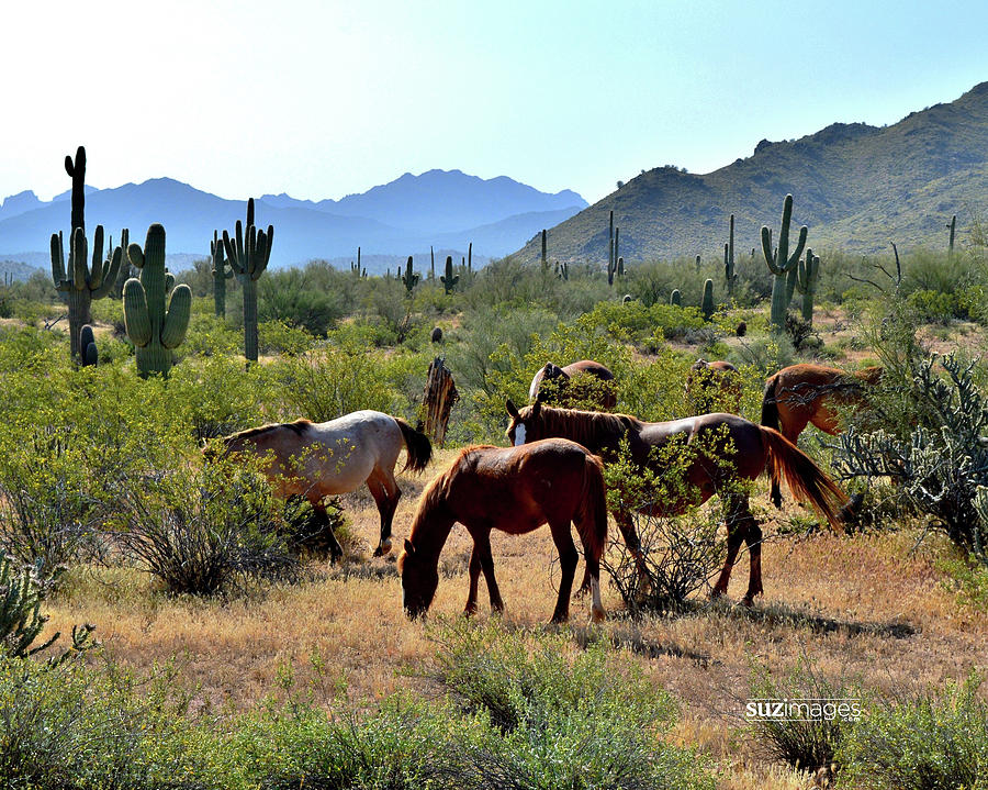 Arizona Wild Horses by Susie Loechler