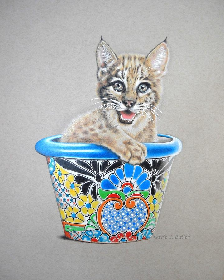 Wildcat Drawing - Arizona Wildcat by Karrie J Butler