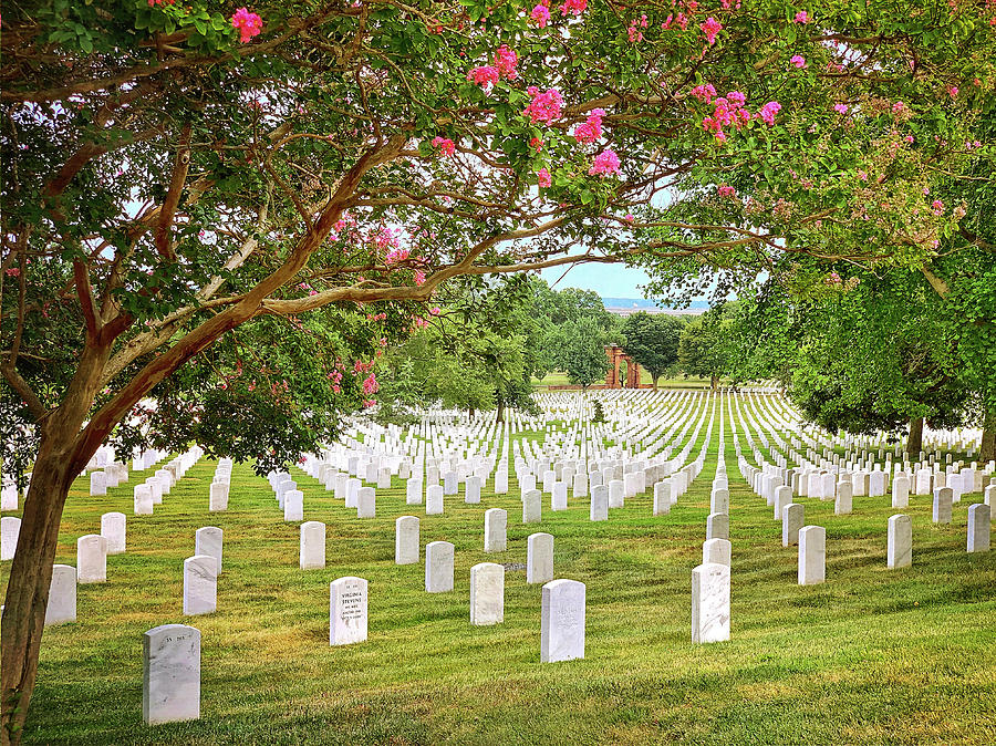 Arlington Cemetery 1 by Jill Love