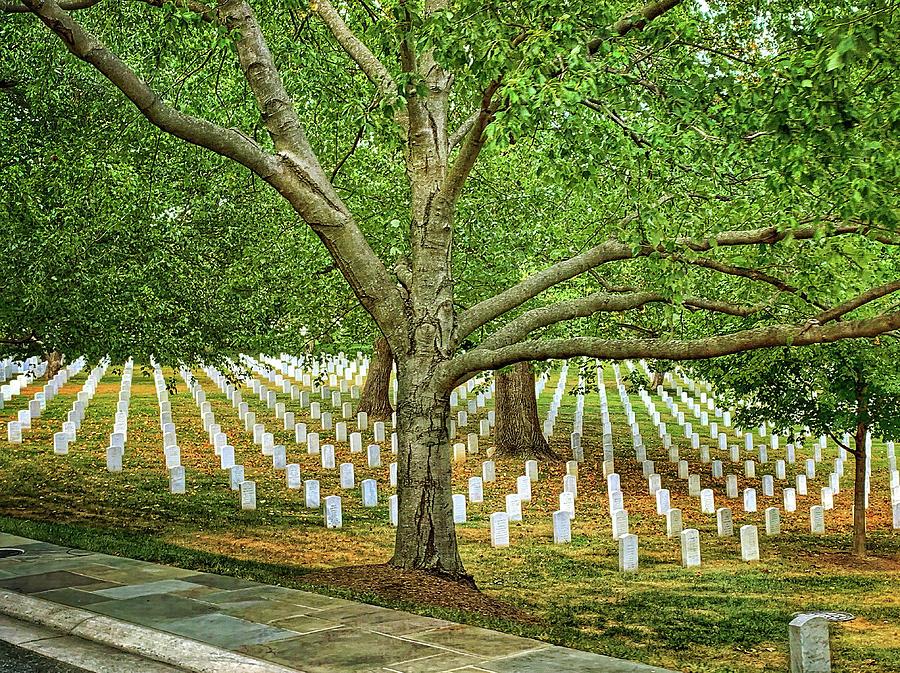 Arlington Cemetery 2 by Jill Love