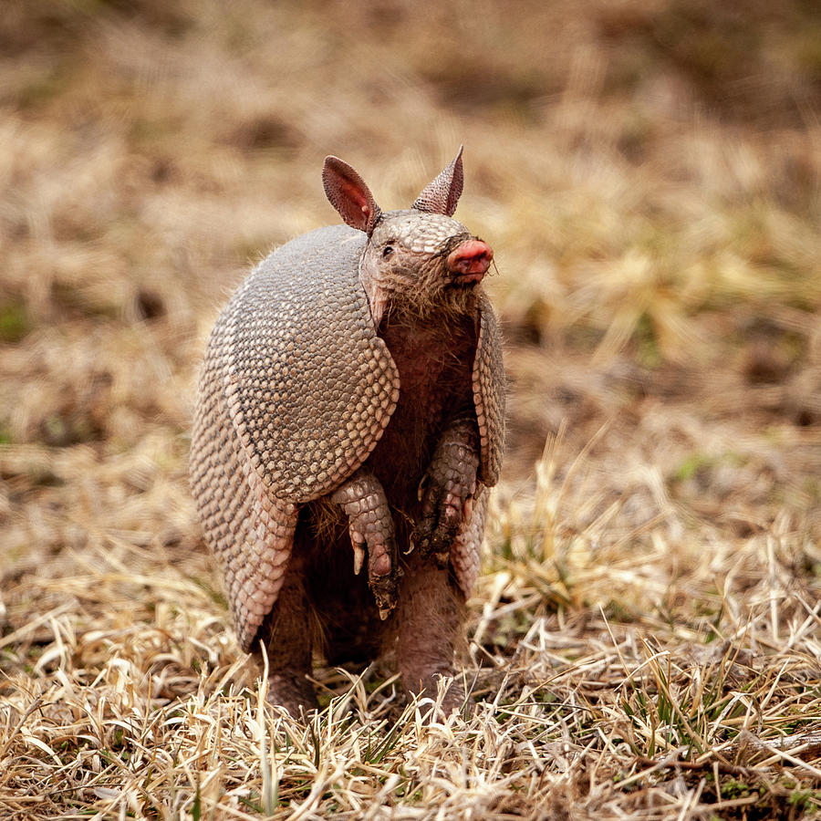 Armadillo Sense by Jeff Phillippi