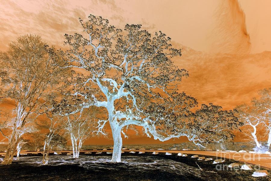Armageddon Landscape Photograph