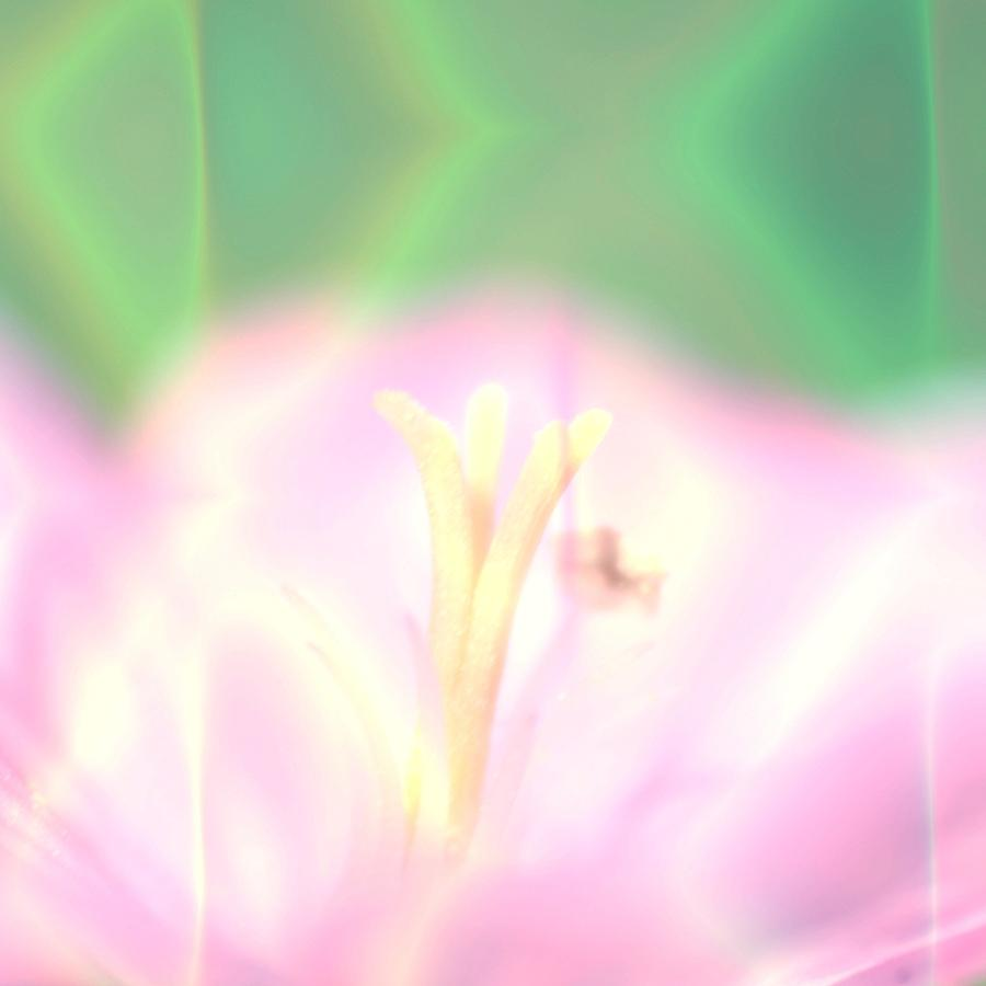 Art Blooming Flower Background Photograph
