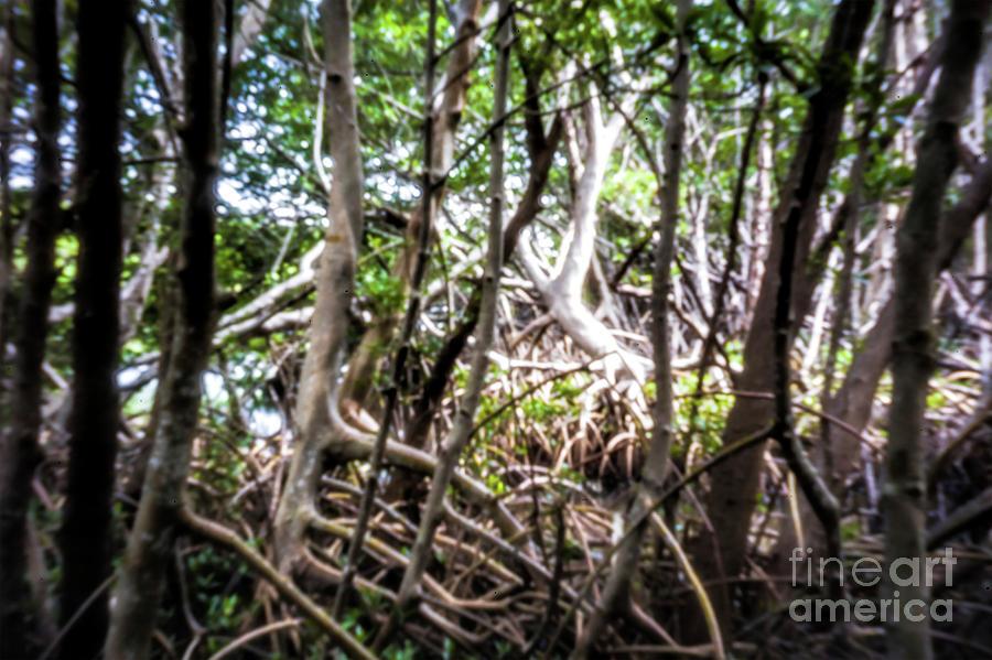 Pinhole Photography Photograph - Art Of Nature, Pinhole Photography, Mangrove Swamp by Felix Lai