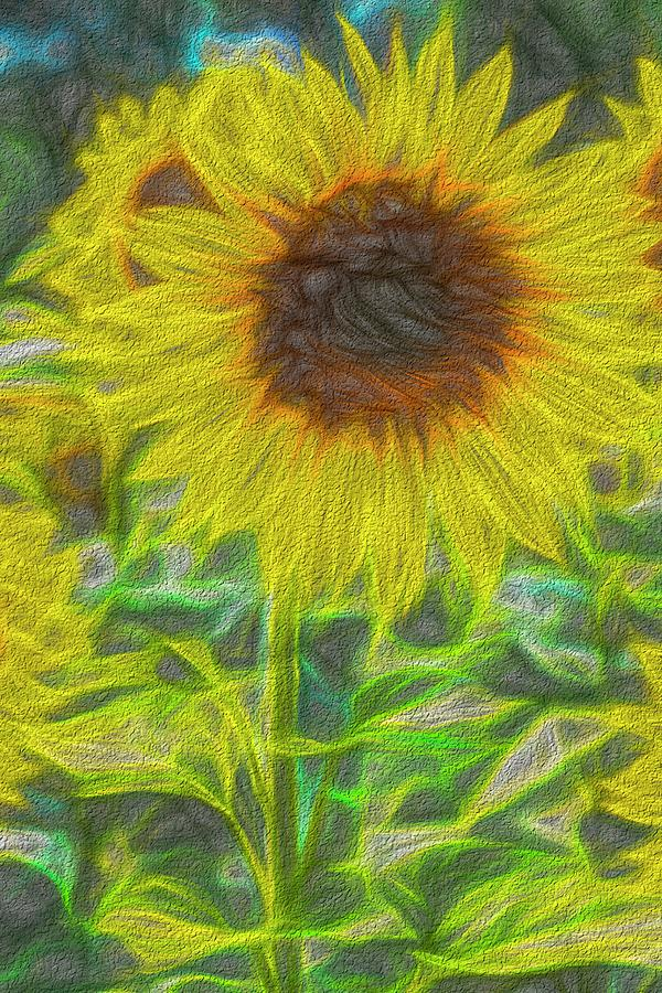 Art Of The Single Sunflower Photograph