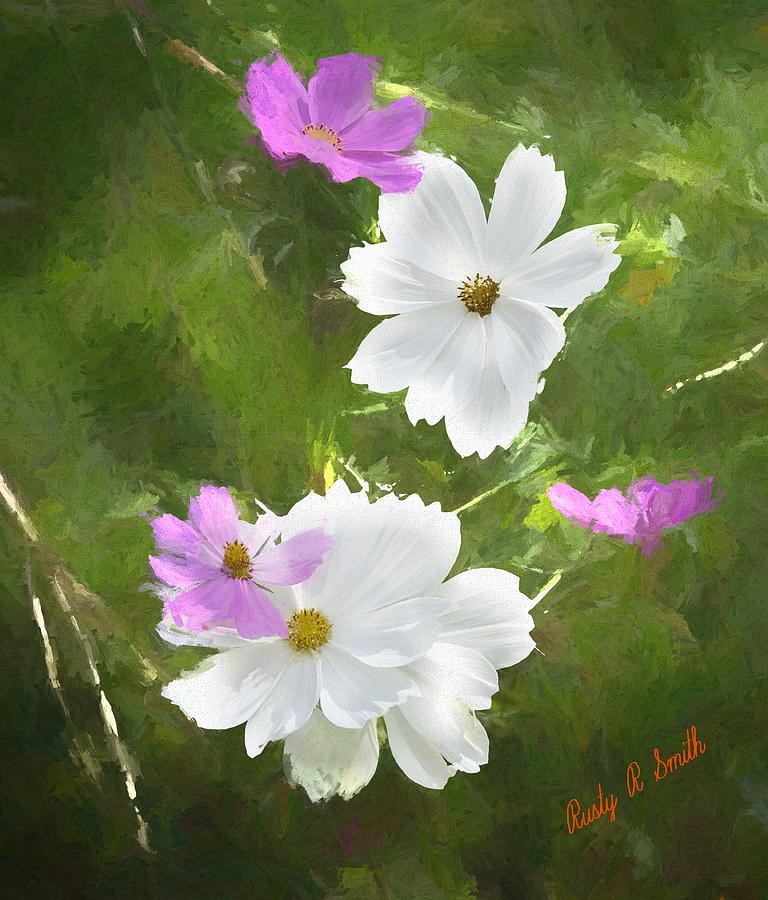 Art photograph of white and pink  Coreopsis flowers. by Rusty R Smith