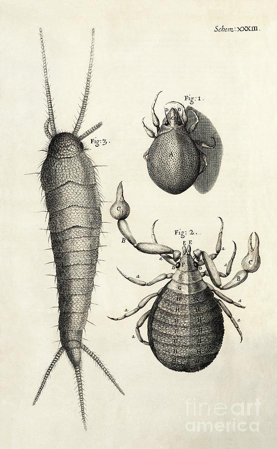 Silverfish Photograph - Arthropods In Hookes Micrographia (1665) by Library Of Congress, Rare Book And Special Collections Division/science Photo Library