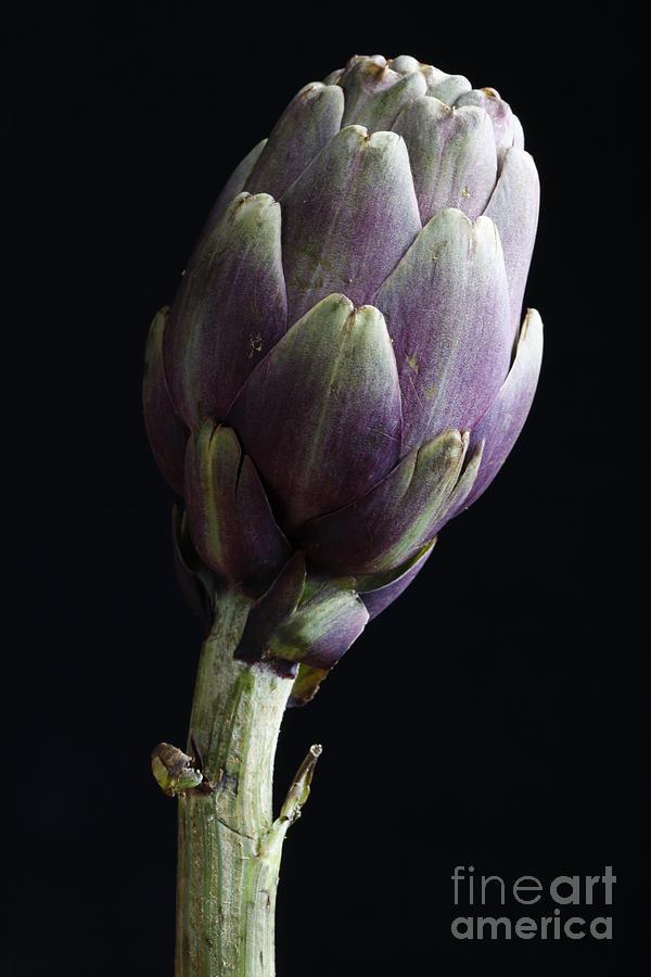 Salad Photograph - Artichoke Classic Still Life by Tommaso Lizzul