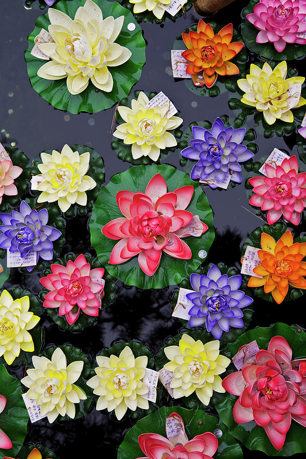 Artificial Flowers Floating On Fish Photograph by Richard Ianson