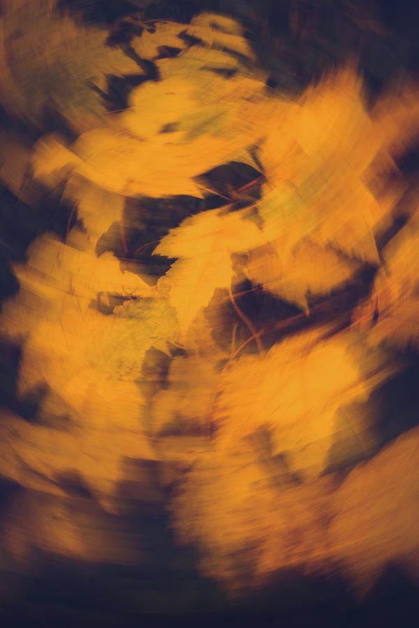 Artistic autumn - Yellow leaves in motion by Cristina Stefan