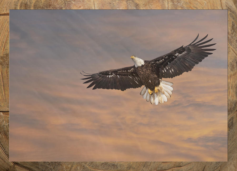 Artistic Bald Eagle 2019 by Thomas Young