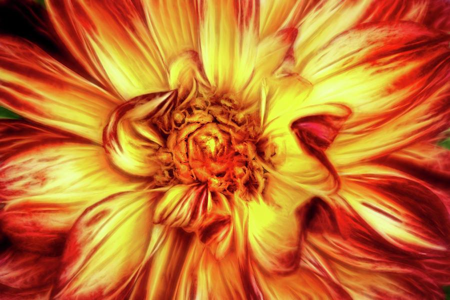 Artistic Dahlia in Multicolors by Don Johnson