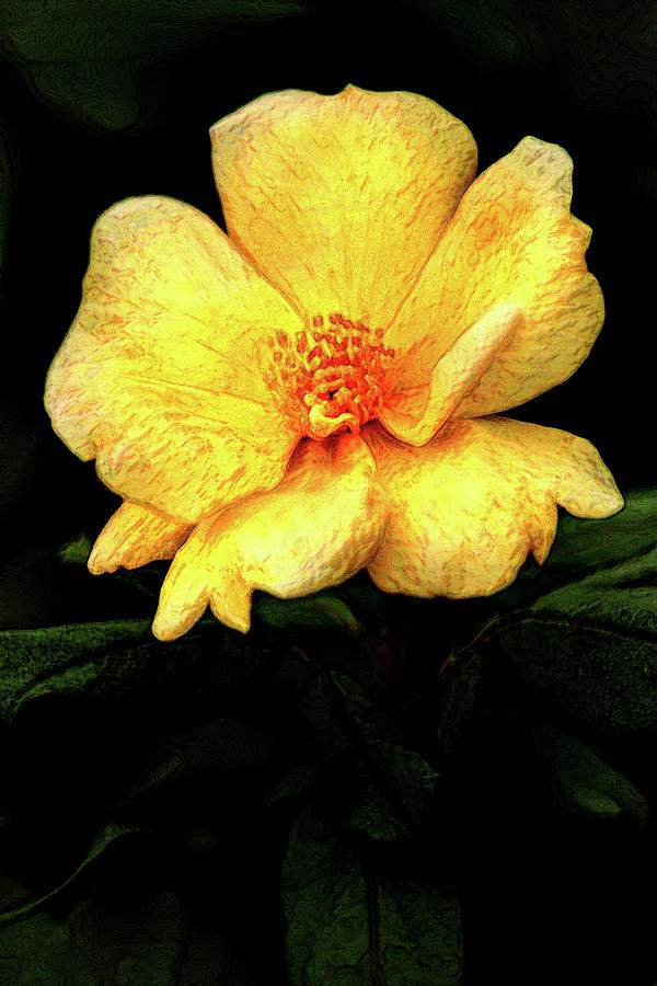 Artistic Small Yellow Rose by Don Johnson