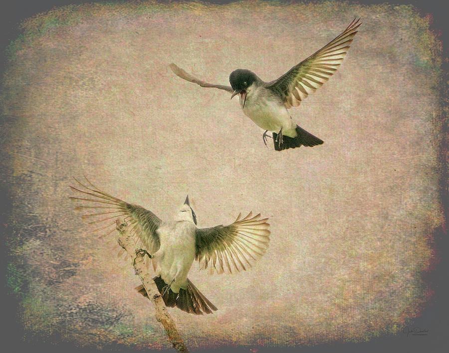 Artsy Flirting Kingbirds by Judi Dressler