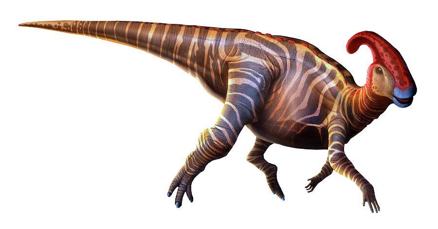 Artwork Of A Parasaurolophus Dinosaur Digital Art by Mark Garlick