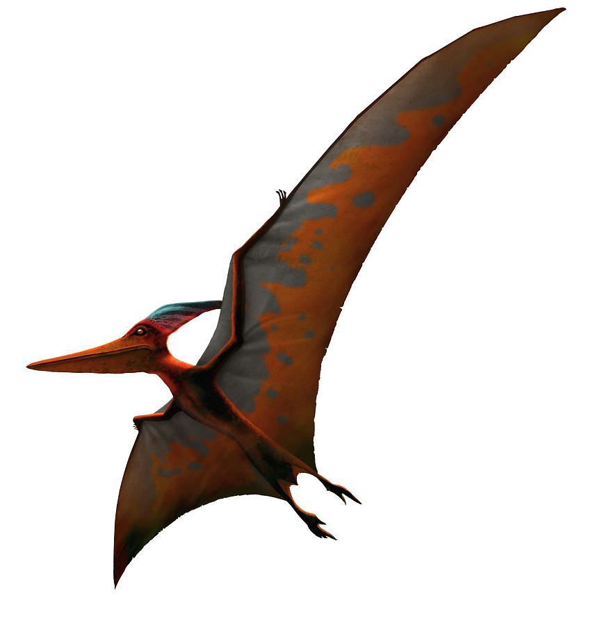 Artwork Of Pteranodon Sternbergi Digital Art by Mark Garlick