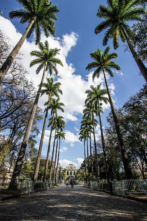 As Palmeiras Da Praça Da Liberdade Photograph by Cecilia Alvarenga