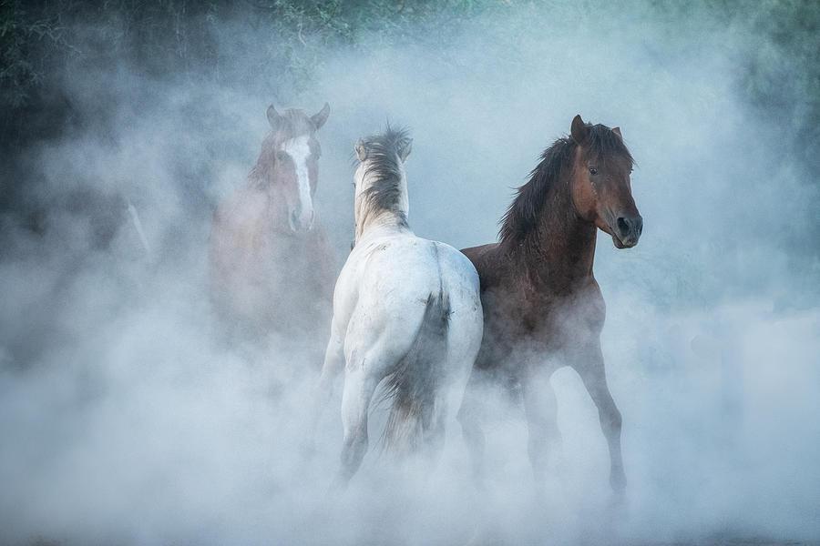 As The Dust Flies  by Saija Lehtonen