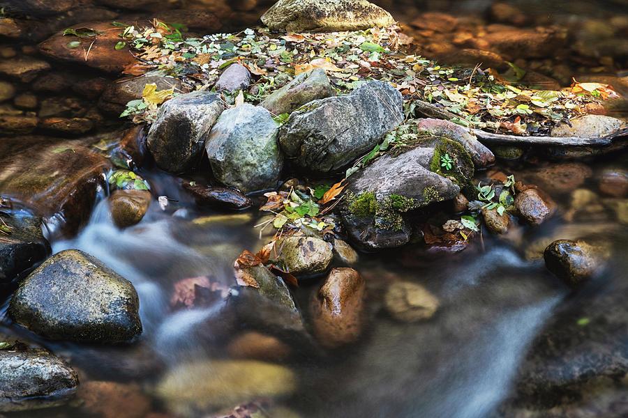 As The Leaves Swirl by Saija Lehtonen