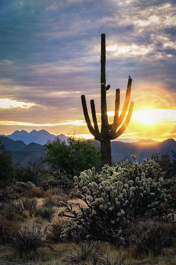As The Sun Rises On The Sonoran  by Saija Lehtonen