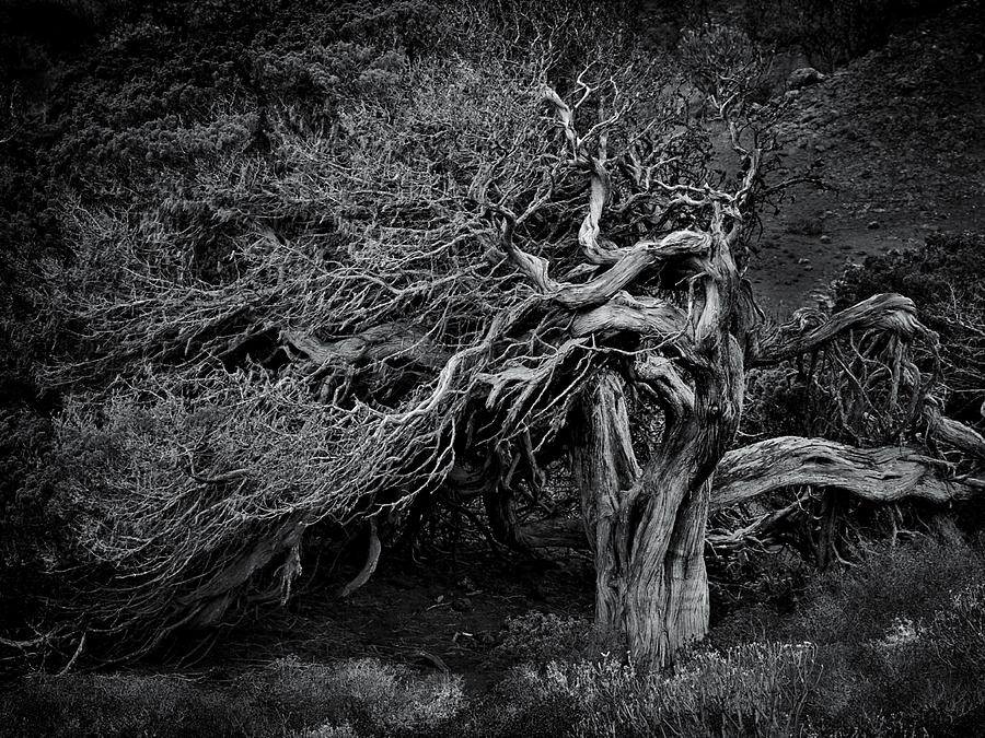 Tree Photograph - As Time Goes By by Txules