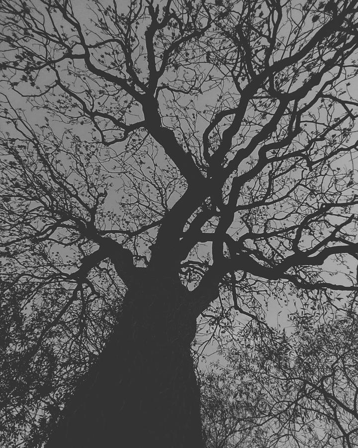 Ash Tree by Samuel Pye