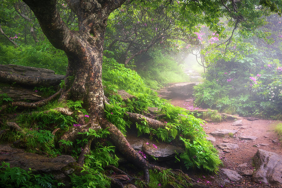 Asheville North Carolina Appalachian Mountains Hiking Trail Scenic Landscape Photograph