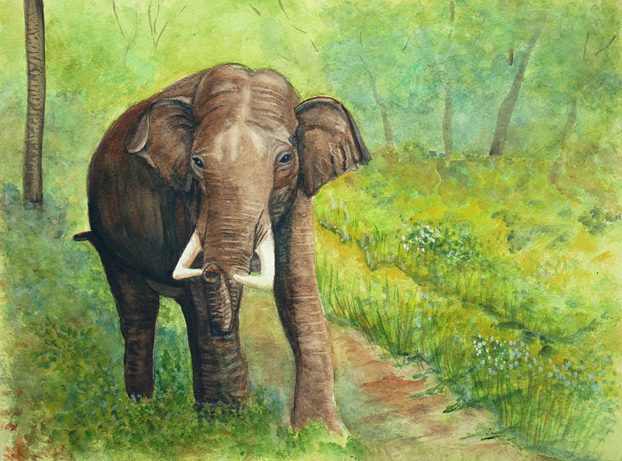 Asian Elephant by Dorothy Riley