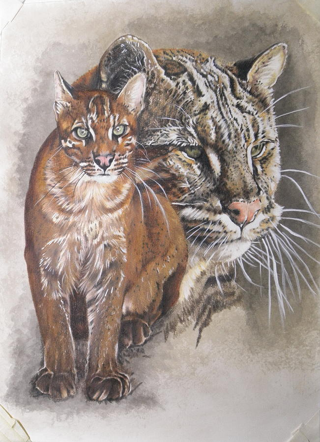 Asian Golden Cat almost there by Barbara Keith