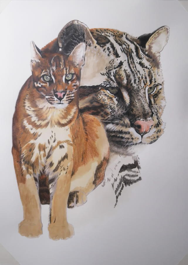 Asian Golden Cat in progress by Barbara Keith
